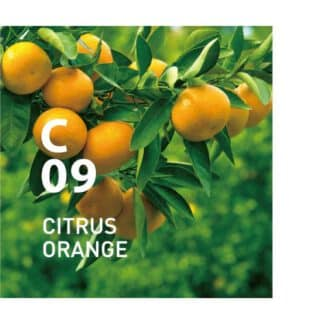 Clean Air C09 CITRUS ORANGE is een verfrissende en vriendelijke citrusgeur die de luchtzuiverende kracht van Sakhalin-spar gebruikt. Ingrediënten: Sakhalin-spar, etc. in package